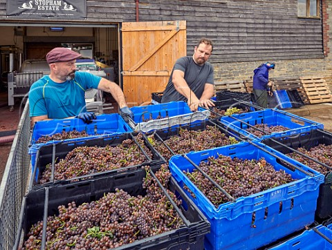 Matt Borsay left and Tom Bartlett unloading Pinot Gris grapes at the winery of Stopham Estate  Stopham Sussex England
